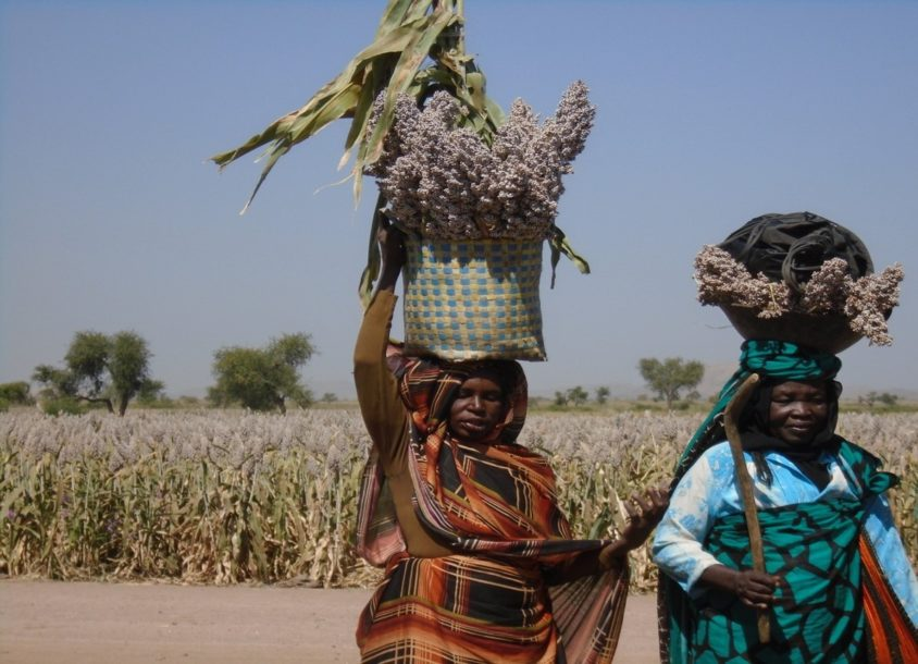 Supporting Women Farmers